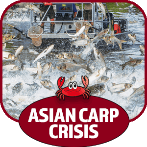 Silverfin Group - Asian Carp Crisis