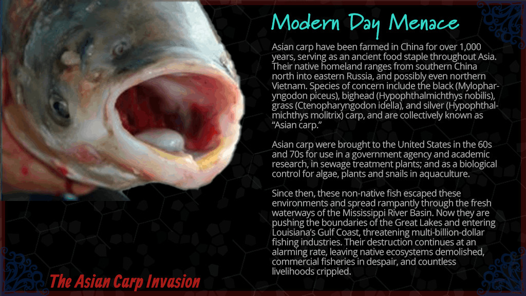 Silverfin™ Fish Cakes Story