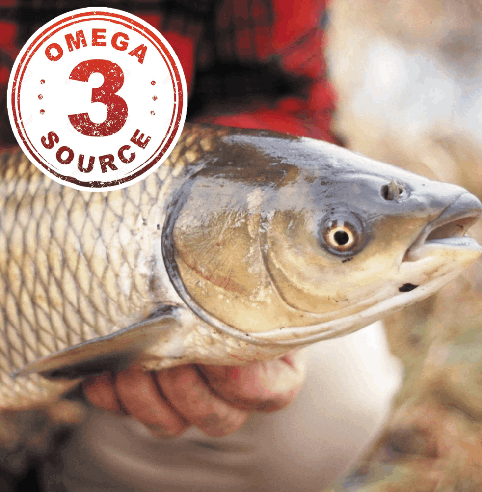 Asian Carp Higherst in Omega 3 Faty Acids Amongst Freshwater Fish